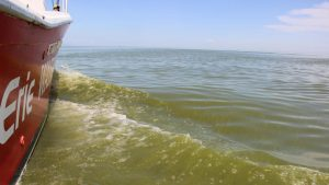 Microscopic Organisms Invade Lake Erie